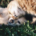 How to Turn Pets Into An Irresistibly Lovable Marketing Department